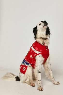 Medicine - Светр для собаки Xmass
