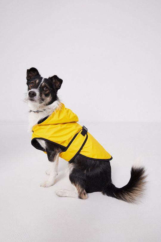 bursztynowy Medicine - Kurtka dla psa Essential Damski